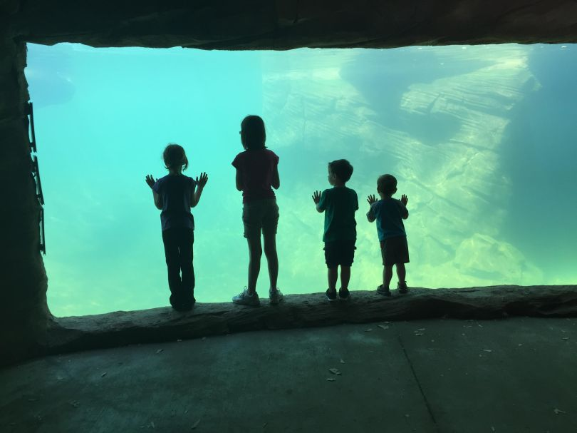 kids-at-zoo